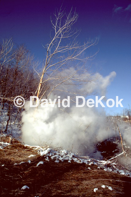 Steam and Tree, 3/9/1984