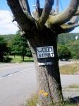 The fire tree, Centralia